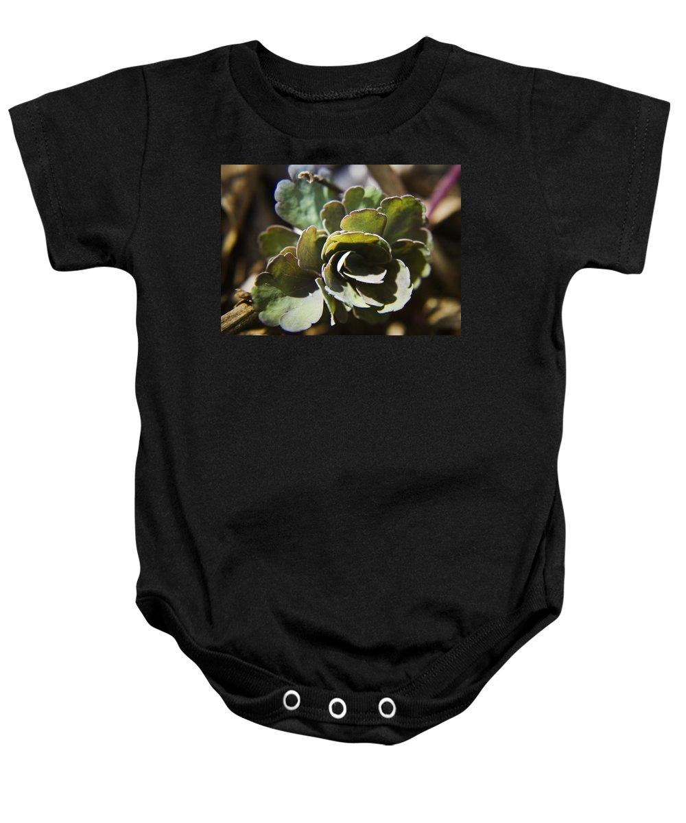 Aquilegia Baby Onesie featuring the photograph Columbine Foliage by Teresa Mucha
