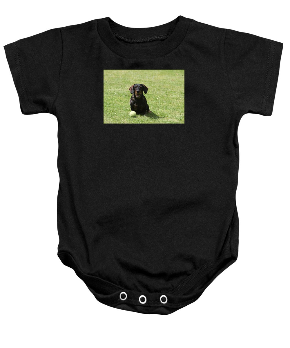 Dog Baby Onesie featuring the photograph Come On by Christiane Schulze Art And Photography