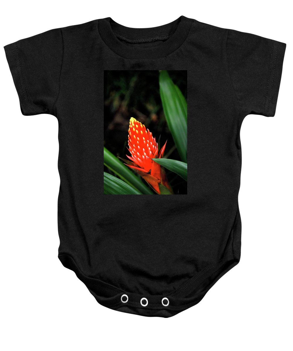 Red Flower Baby Onesie featuring the photograph Cone Of Color by Debbie Karnes