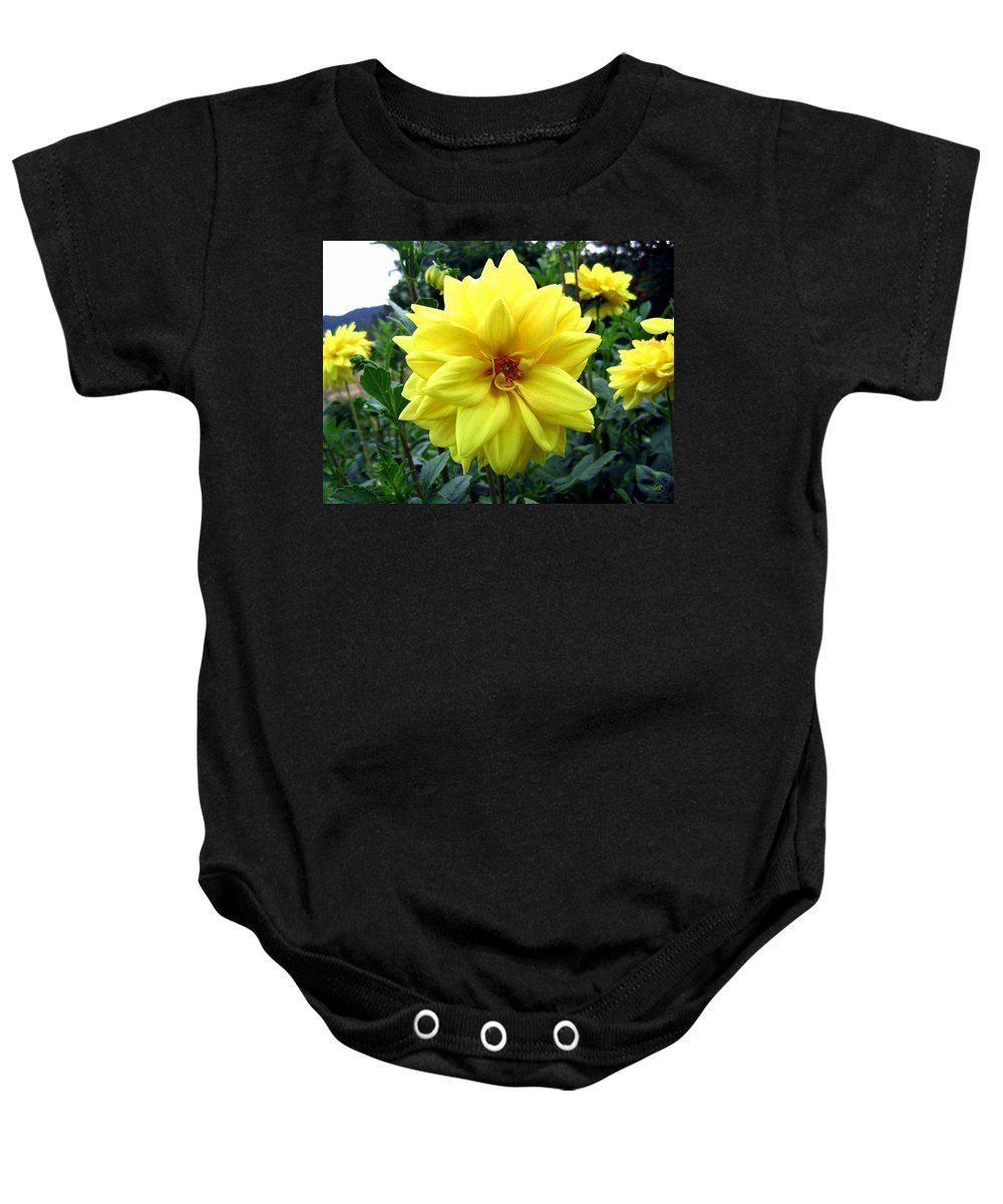 Yellow Dahlias Baby Onesie featuring the photograph Country Dahlias by Will Borden