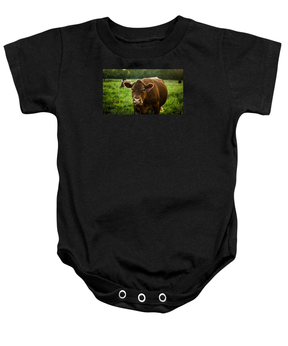 Animals Baby Onesie featuring the photograph Cow by Darren Van Dunk