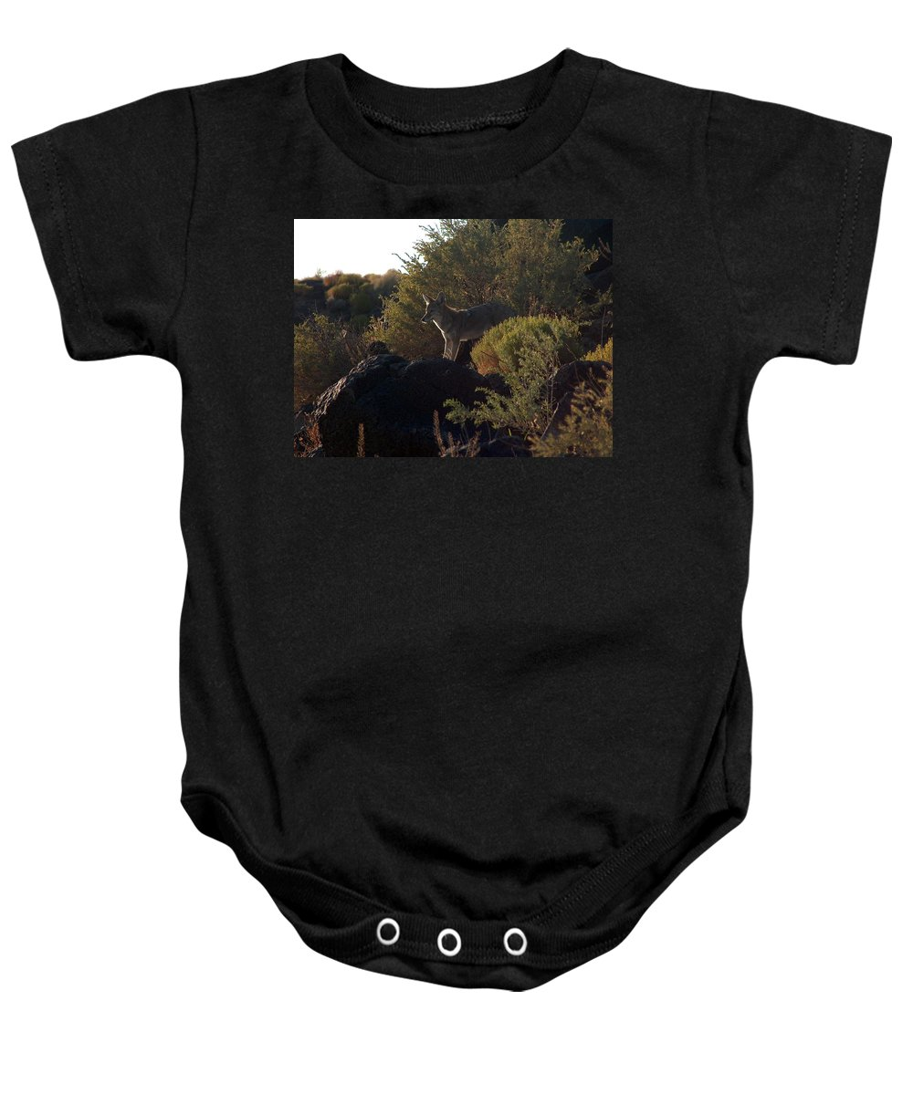 Coyote Baby Onesie featuring the photograph Coyote At The Petrogyphs 2 by Tim McCarthy