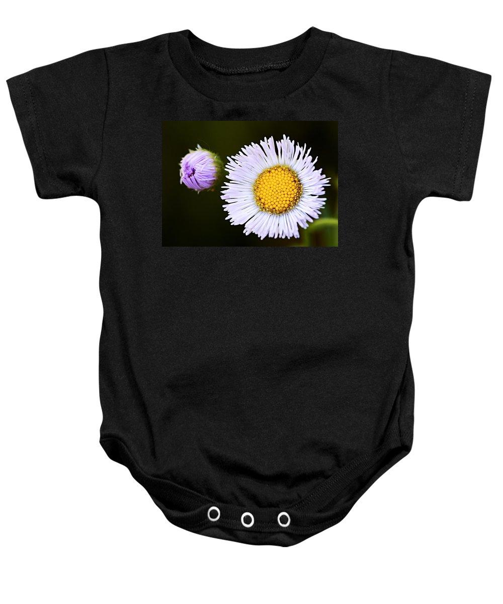 Fleabane Baby Onesie featuring the photograph Daisy Fleabane 3 by Larry Ricker