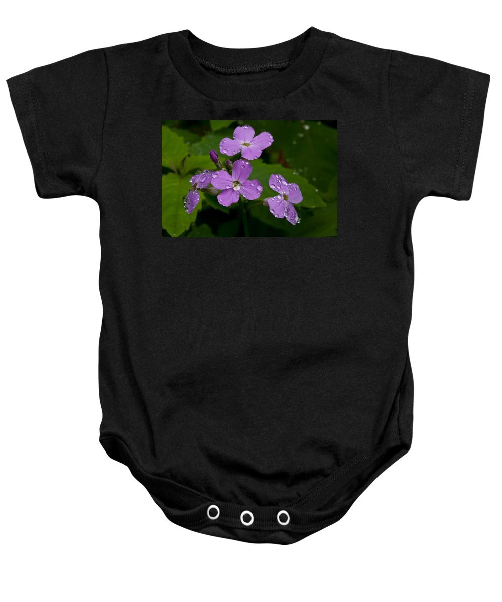 Wildflowers Baby Onesie featuring the photograph Dame's Rocket Raindrops#1 by Irwin Barrett