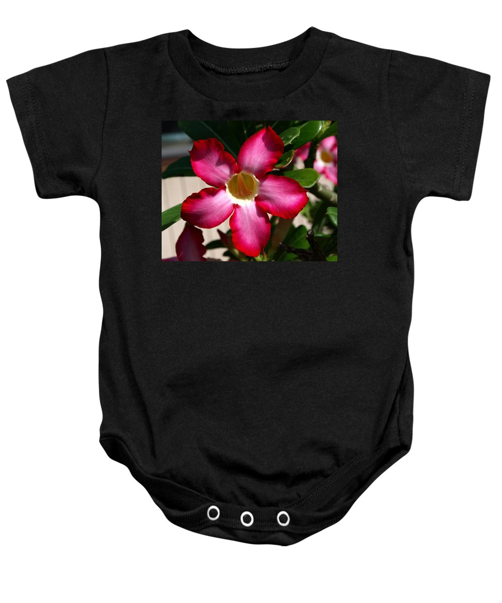 Desert Rose; Desert; Rose; Red; Pink; Flower; Bush; Garden; Florida; Plant; Adenium; Obesum; Africa; Baby Onesie featuring the photograph Desert Rose by Allan Hughes