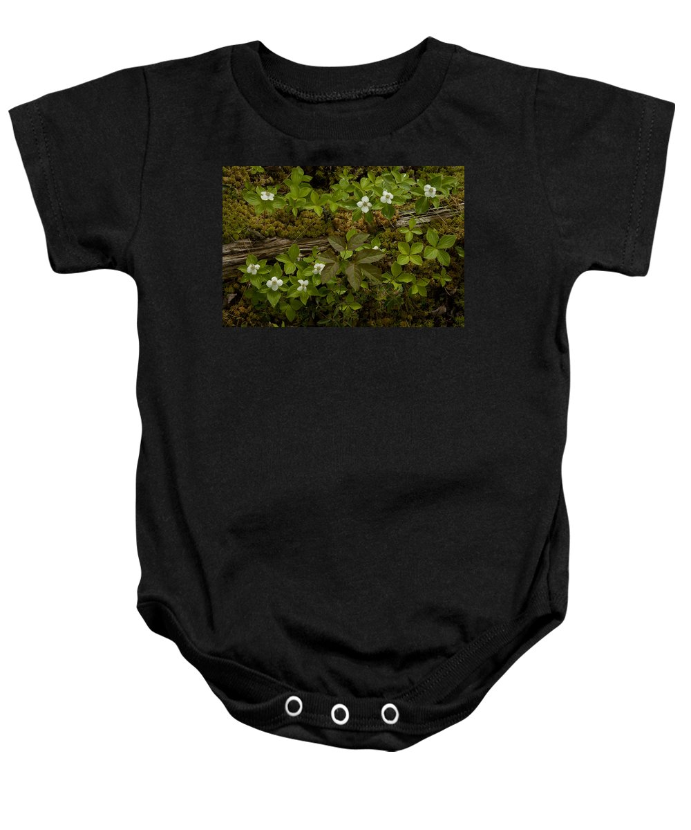Wildflowers Baby Onesie featuring the photograph Dew Dropped Spring Bunchberries by Irwin Barrett