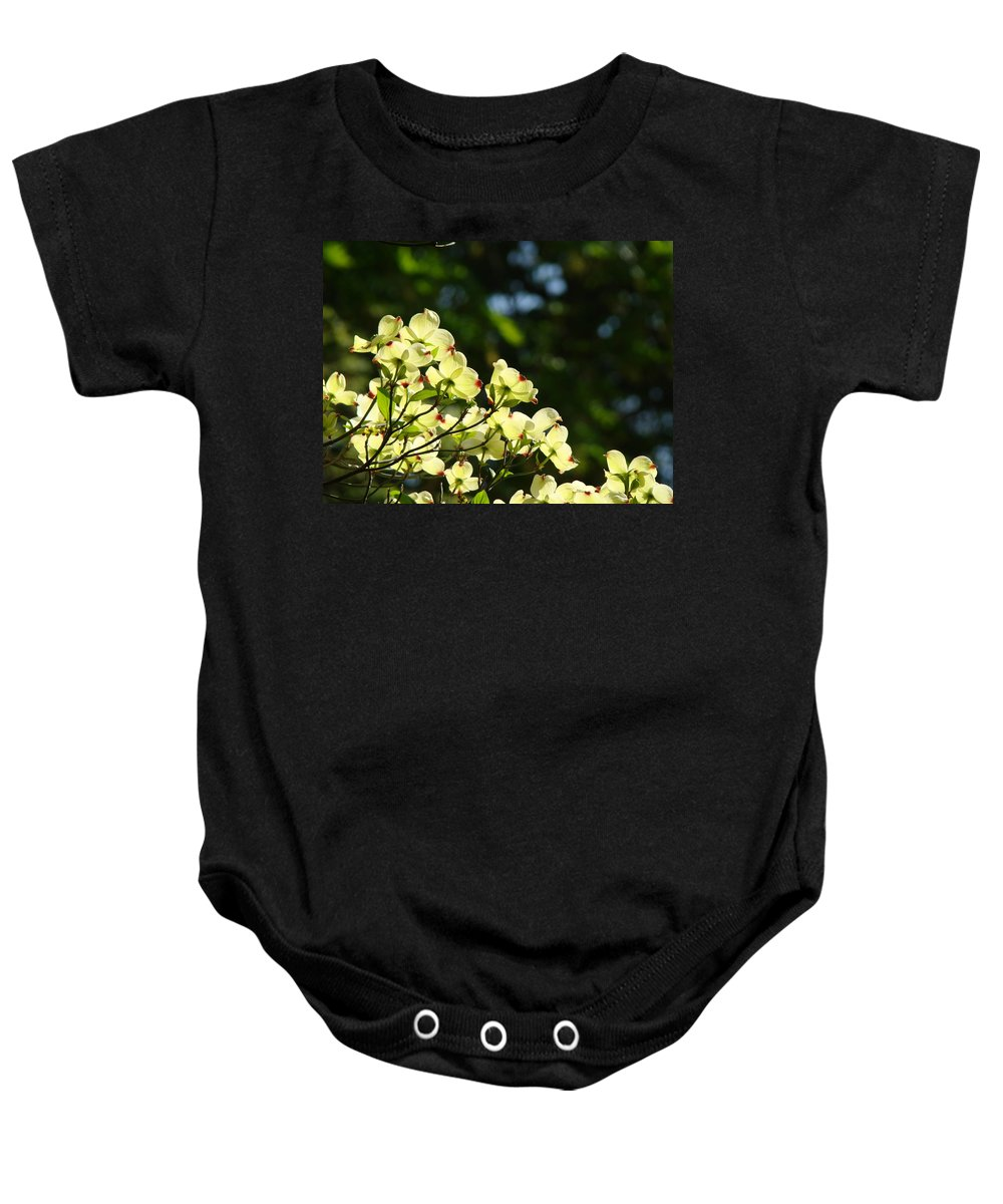 Dogwood Baby Onesie featuring the photograph Dogwood Flowers White Dogwood Tree Flowers Art Prints Cards Baslee Troutman by Baslee Troutman