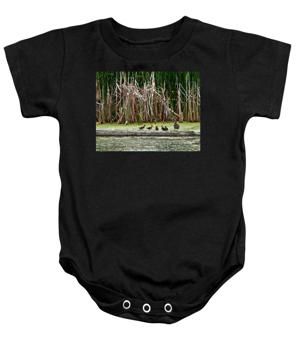 Wood Duck Baby Onesie featuring the photograph Ducks All In A Row by Edward Peterson