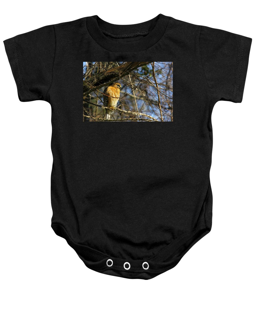 Still Hunting Baby Onesie featuring the photograph Early Morning Still Hunting Coopers Hawk Art by Reid Callaway