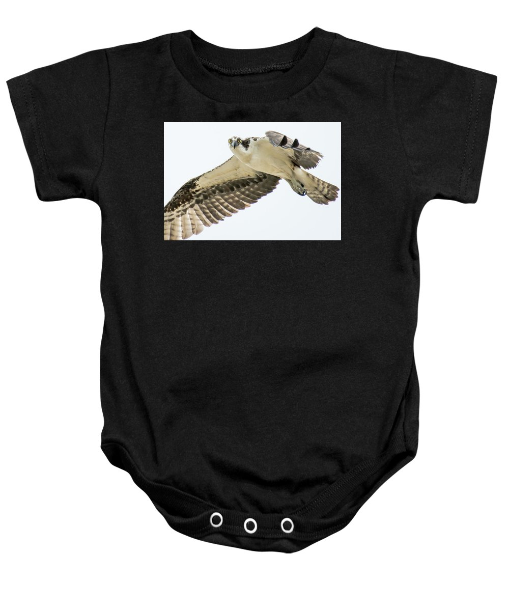 Wildlife Photography Baby Onesie featuring the photograph Eye-ball To Eye-ball With An Osprey by John Bartelt