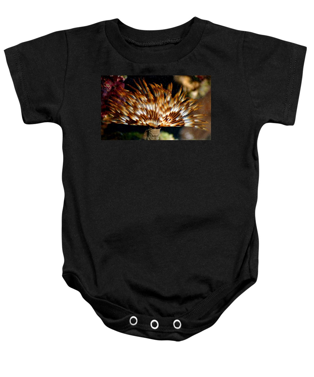 Feather Duster Baby Onesie featuring the photograph Feather Duster by Anthony Jones
