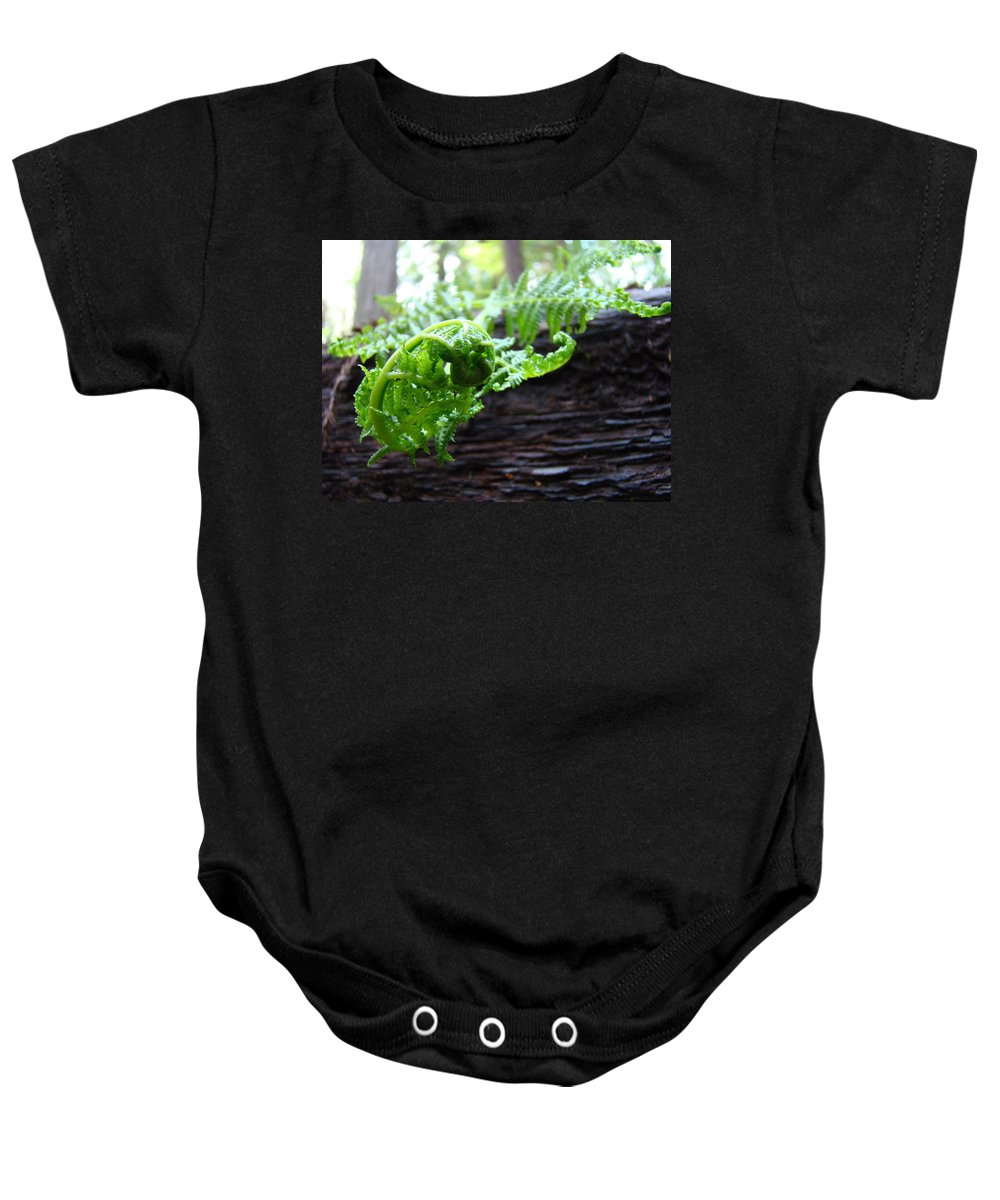 Fern Baby Onesie featuring the photograph Fern On Redwood Tree Art Print Baslee Troutman by Baslee Troutman