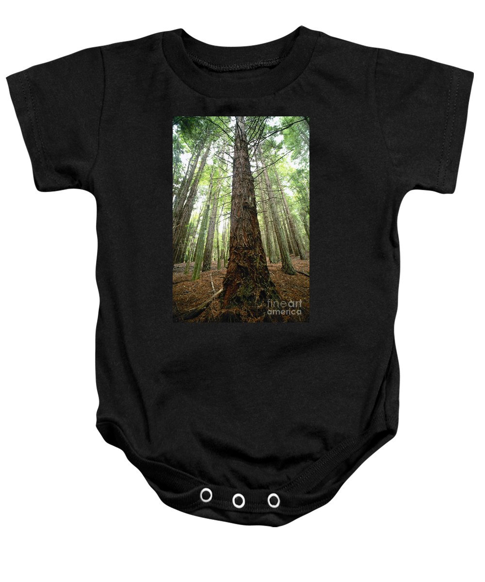Bare Baby Onesie featuring the photograph Filtering Sunshine by Ron Dahlquist - Printscapes