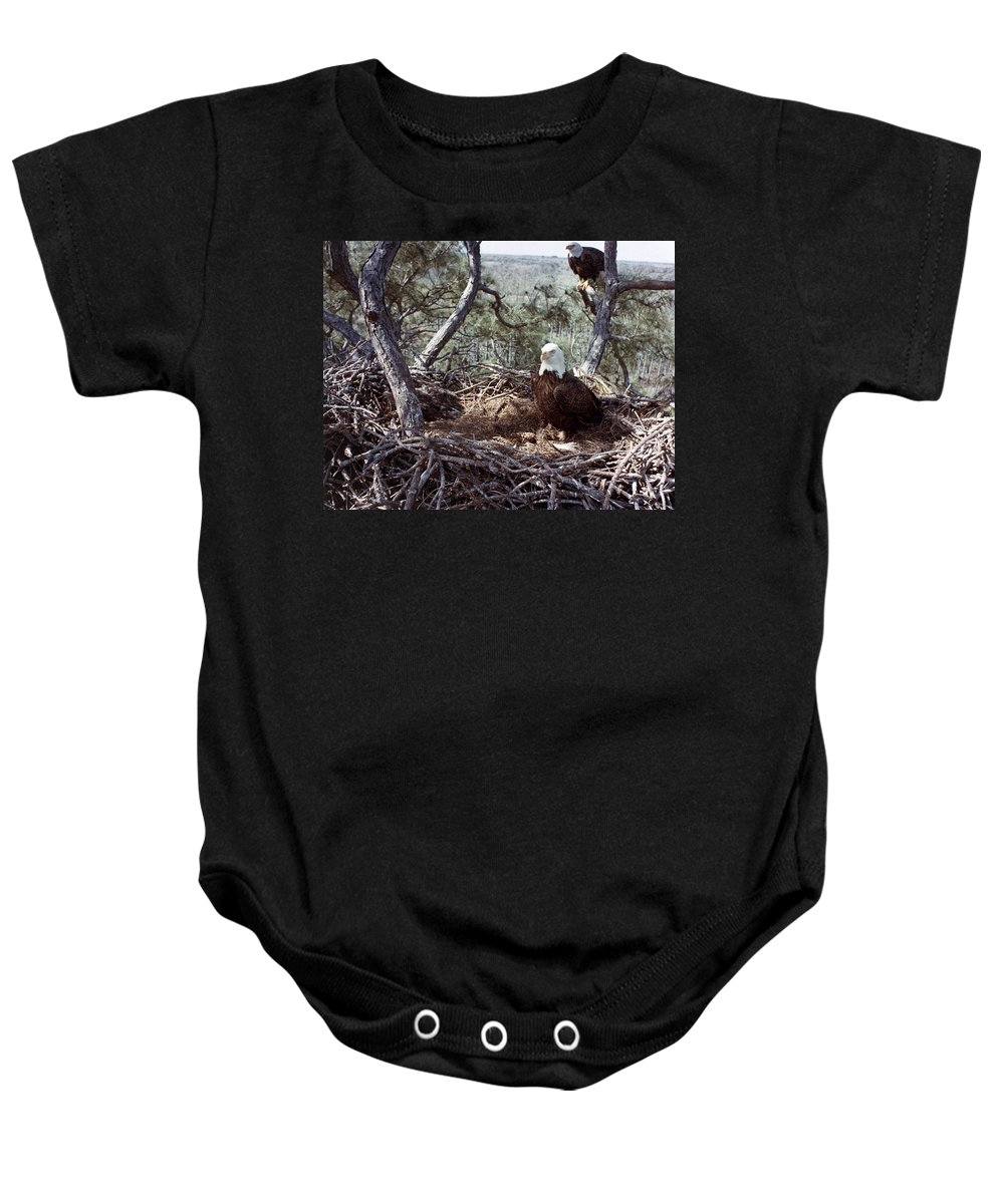 1983 Baby Onesie featuring the photograph Florida: Bald Eagles, 1983 by Granger