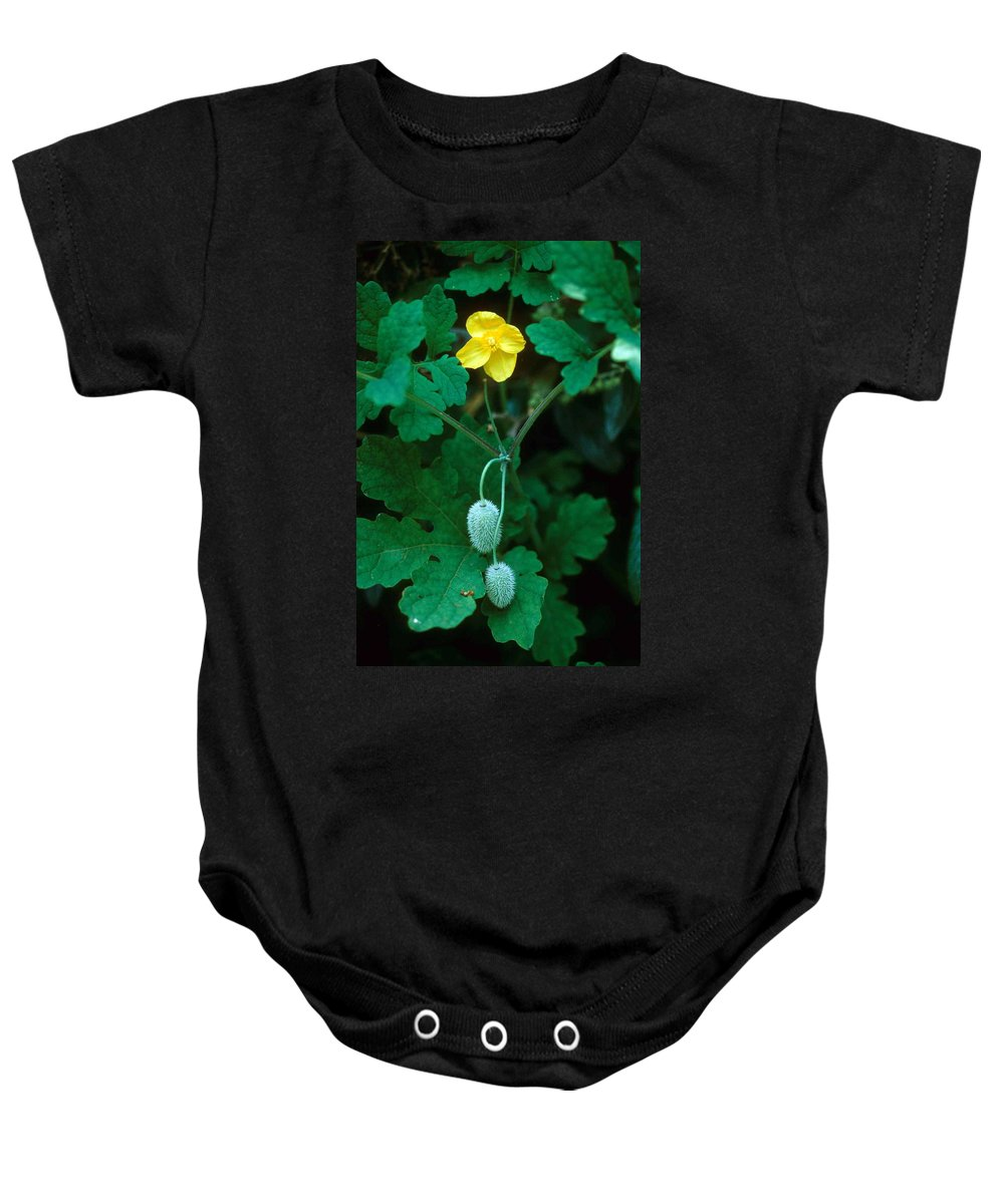 Flower Baby Onesie featuring the photograph Flower And Fruit by Laurie Paci