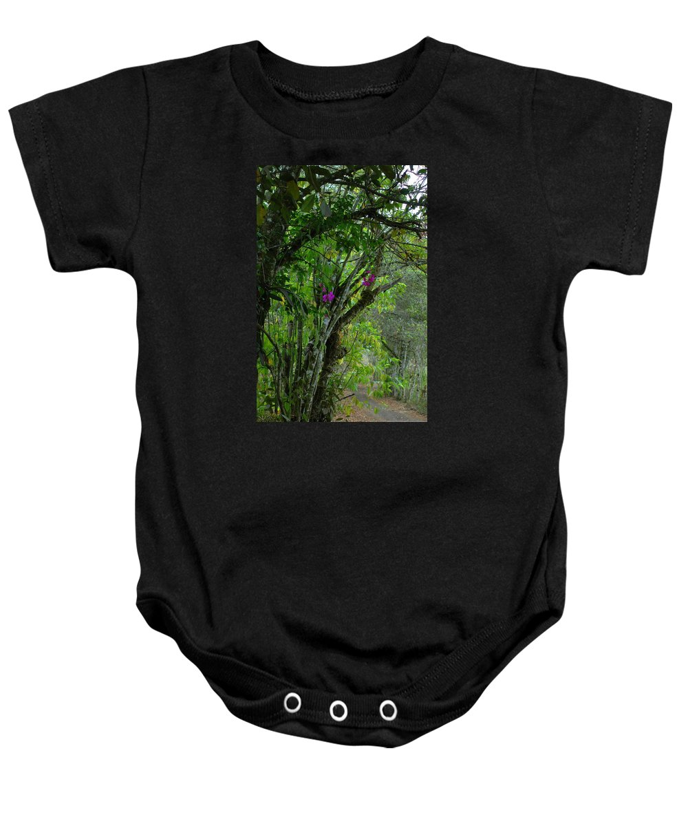 Tropics Baby Onesie featuring the photograph Flowering Trees Near The Path by Teresa Stallings