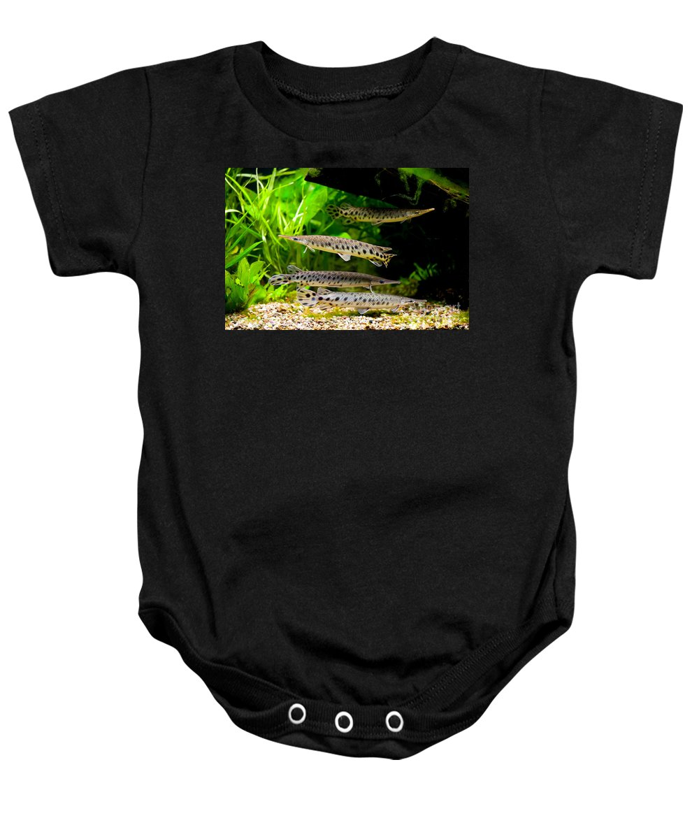 Zoo Baby Onesie featuring the photograph Four Aquarium Fishes In Zoo by Arletta Cwalina