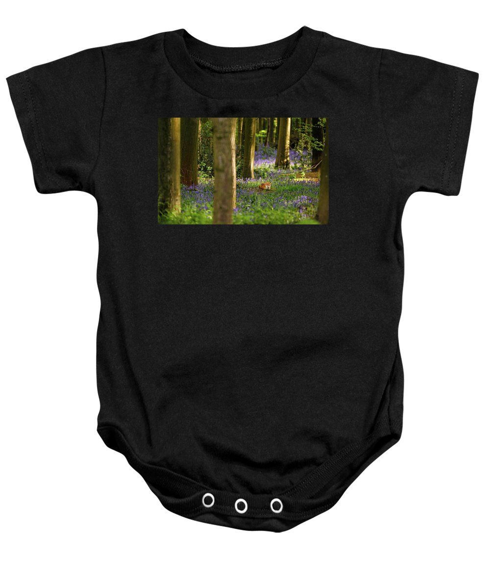 Oakfrith Woods Baby Onesie featuring the photograph Fox In Bluebells by Chris Beard