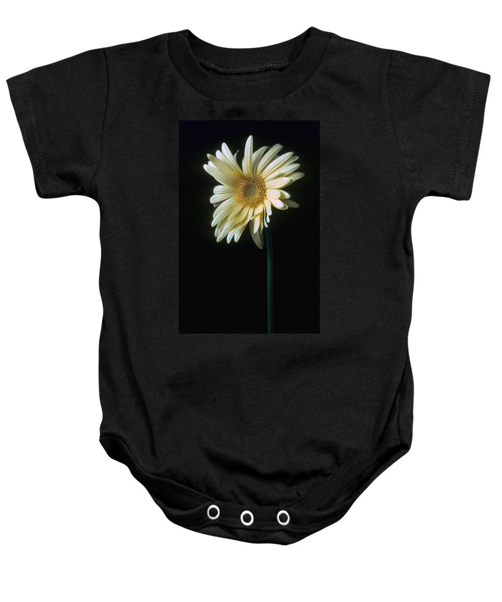 Gerber Baby Onesie featuring the photograph Gerber Daisy by Laurie Paci