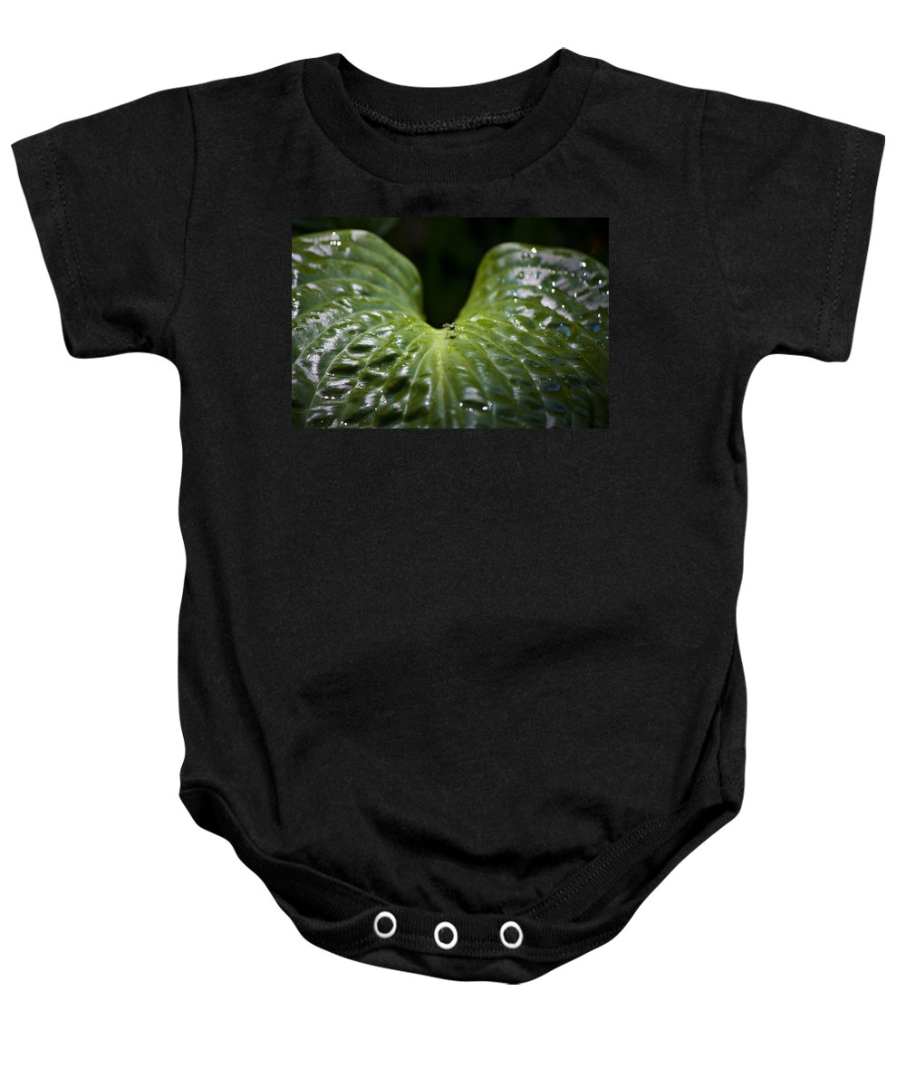 Hosta Baby Onesie featuring the photograph Getting A Drink by Teresa Mucha