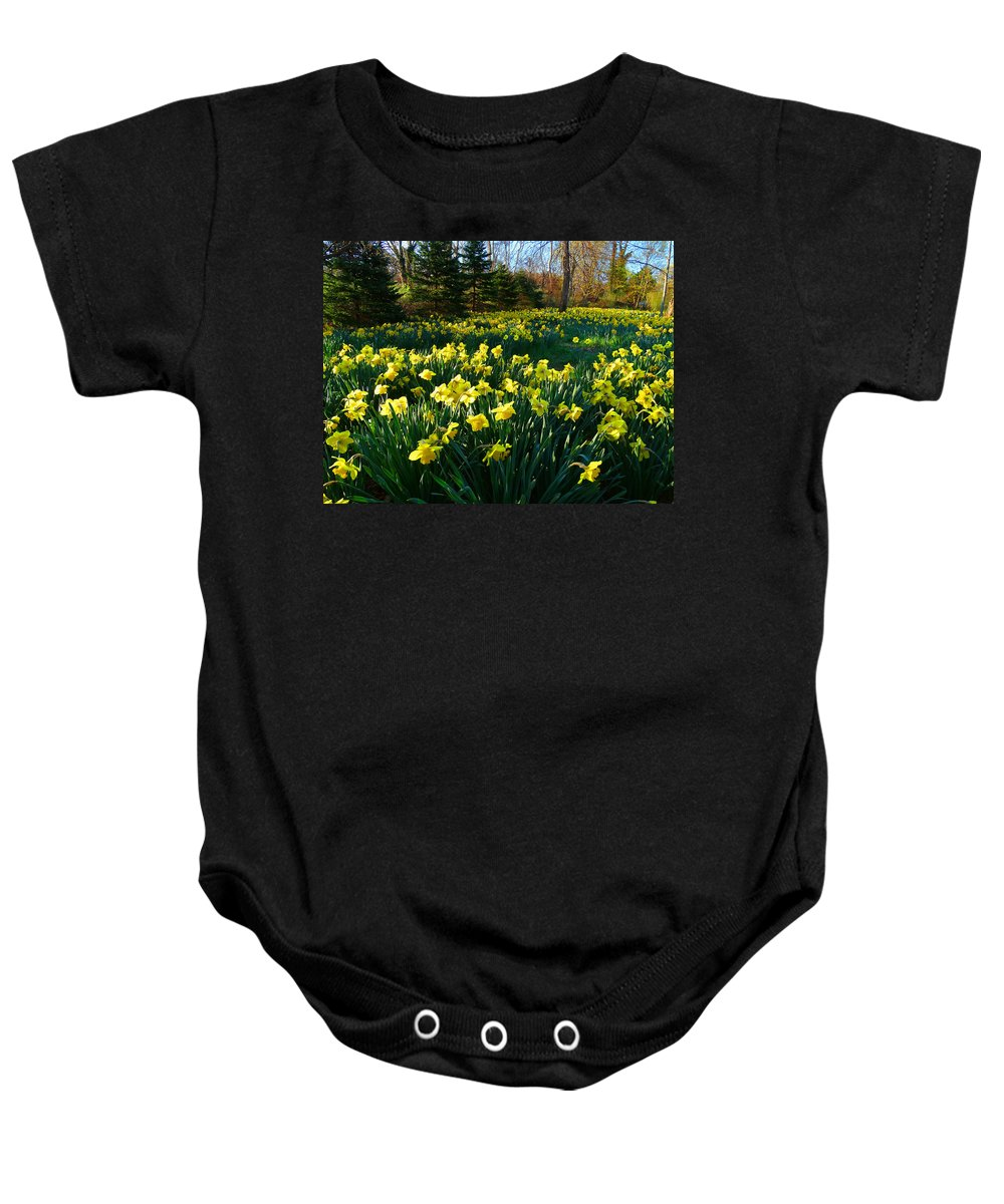Daffodils Baby Onesie featuring the photograph Golden Spring Carpet by Dianne Cowen