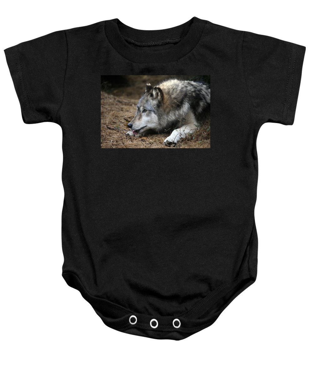 Wolf Baby Onesie featuring the photograph Gray Wolf by Karol Livote