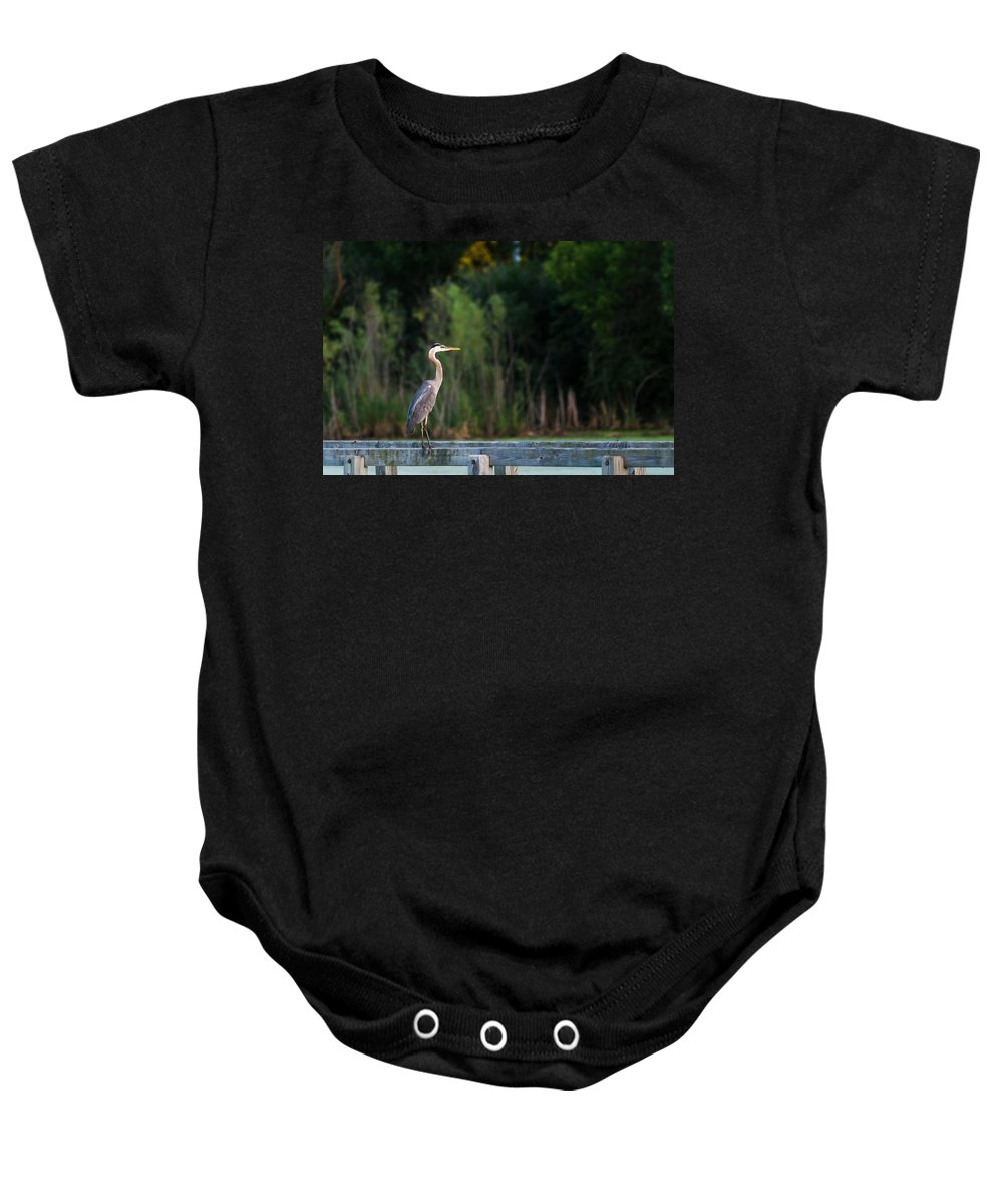 Great Blue Heron Baby Onesie featuring the photograph Great Blue Heron On A Handrail by Edward Peterson
