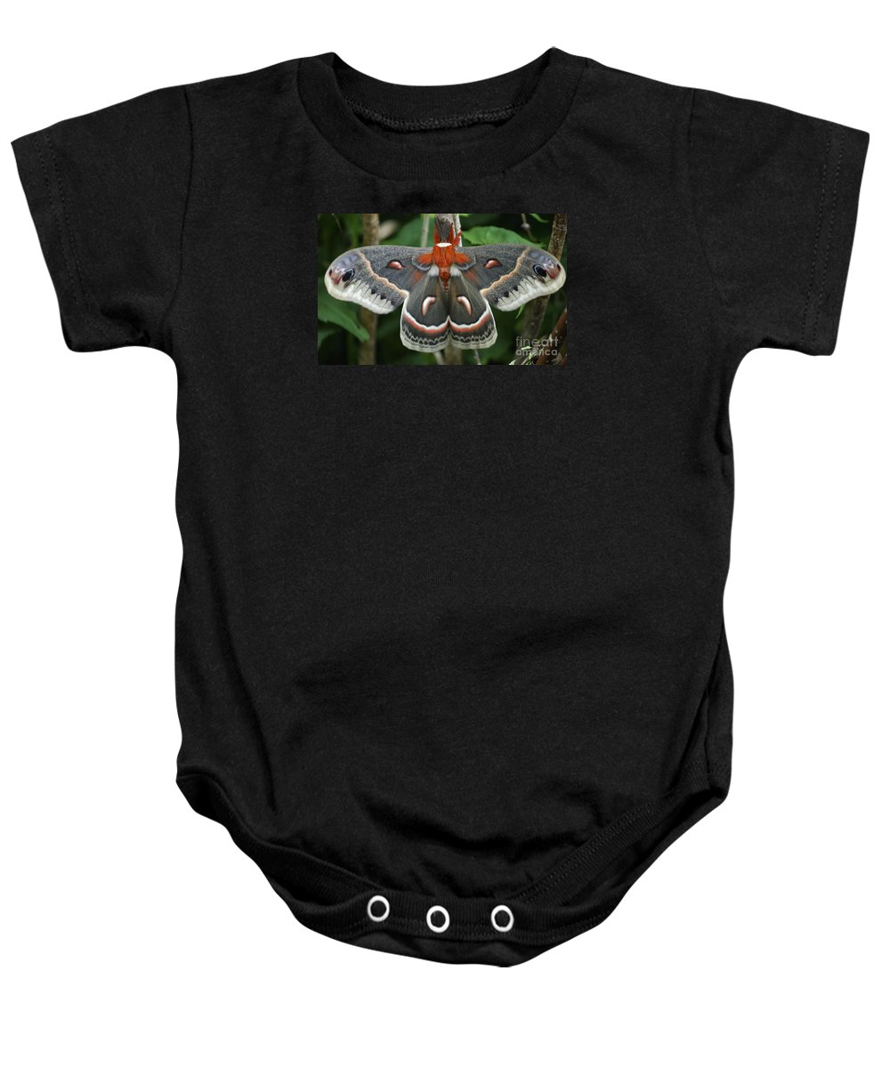 Cecropia Moth Baby Onesie featuring the photograph Happy Birthday by Randy Bodkins