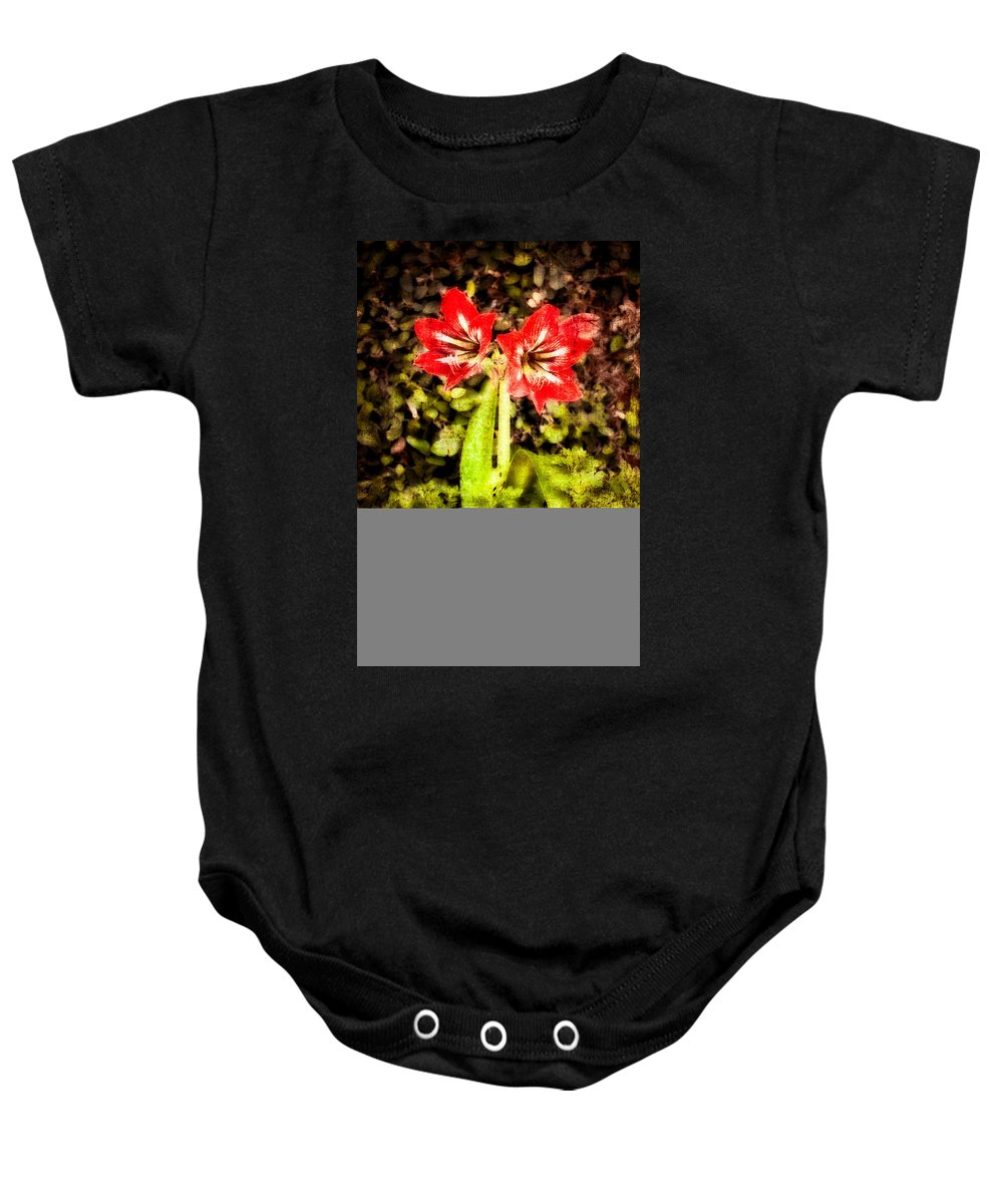 Abstract Baby Onesie featuring the photograph Havana Amaryllis by Rich Leighton