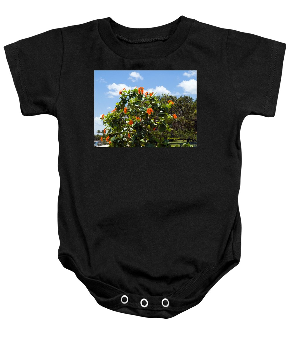 Hibiscus; Rosasinensis; Rosa; Sinensis; Rosa-sinensis; Tree; Bush; Shrub; Plant; Flower; Flowers; Fl Baby Onesie featuring the photograph Hibiscus Rosasinensis With Fruit by Allan Hughes
