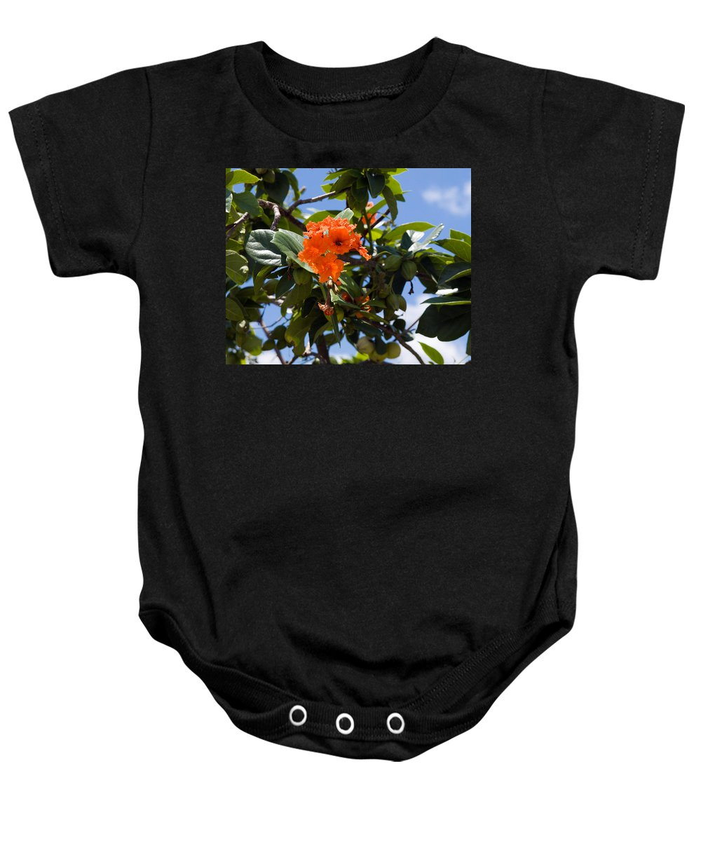 Hibiscus; Rosasinensis; Rosa; Sinensis; Rosa-sinensis; Tree; Bush; Shrub; Plant; Flower; Flowers; Fl Baby Onesie featuring the photograph Hibiscus Rosasinensis With Fruit On The Indian River by Allan Hughes