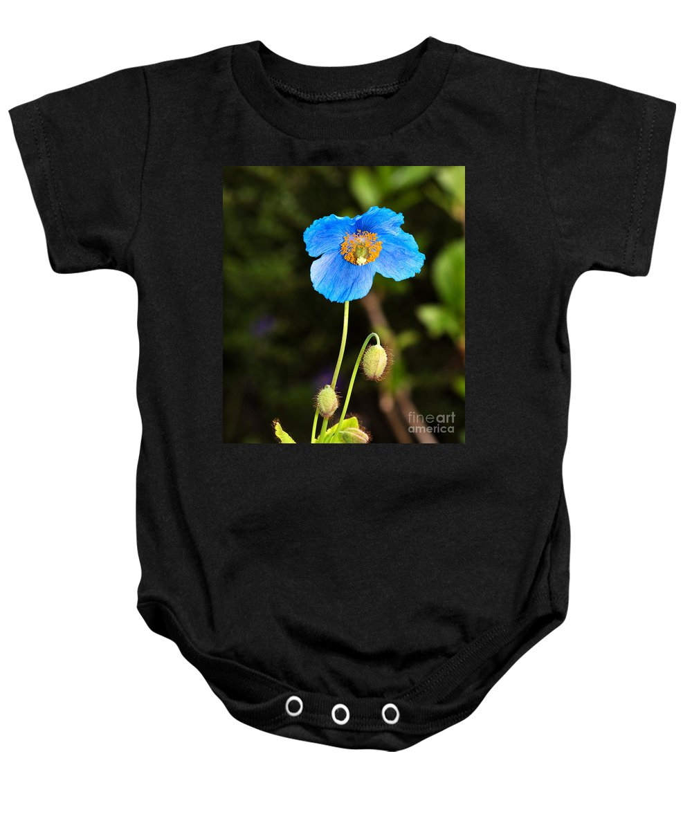 Flower Baby Onesie featuring the photograph Himalayan Blue Poppy by Louise Heusinkveld