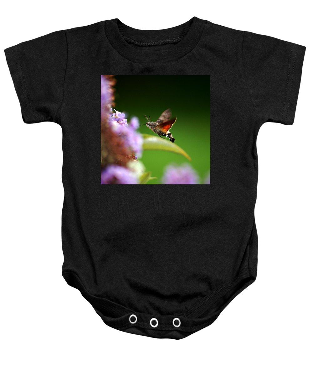 Hummingbird Hawk Moth Baby Onesie featuring the photograph Hummingbird Hawk Moth - Four by P Donovan