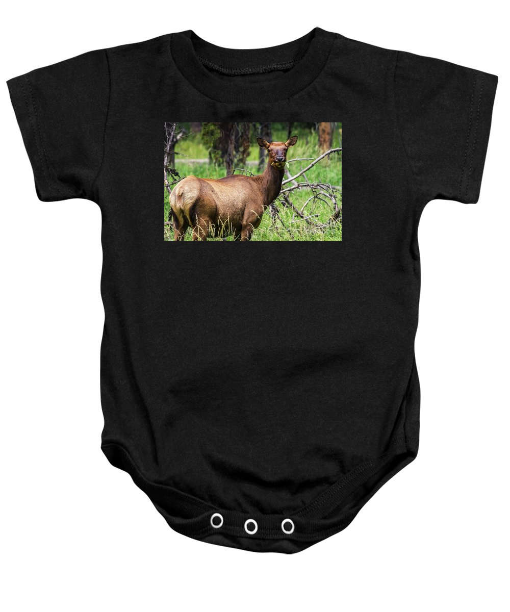Nature Baby Onesie featuring the photograph Hungry Elk by Mirko Chianucci