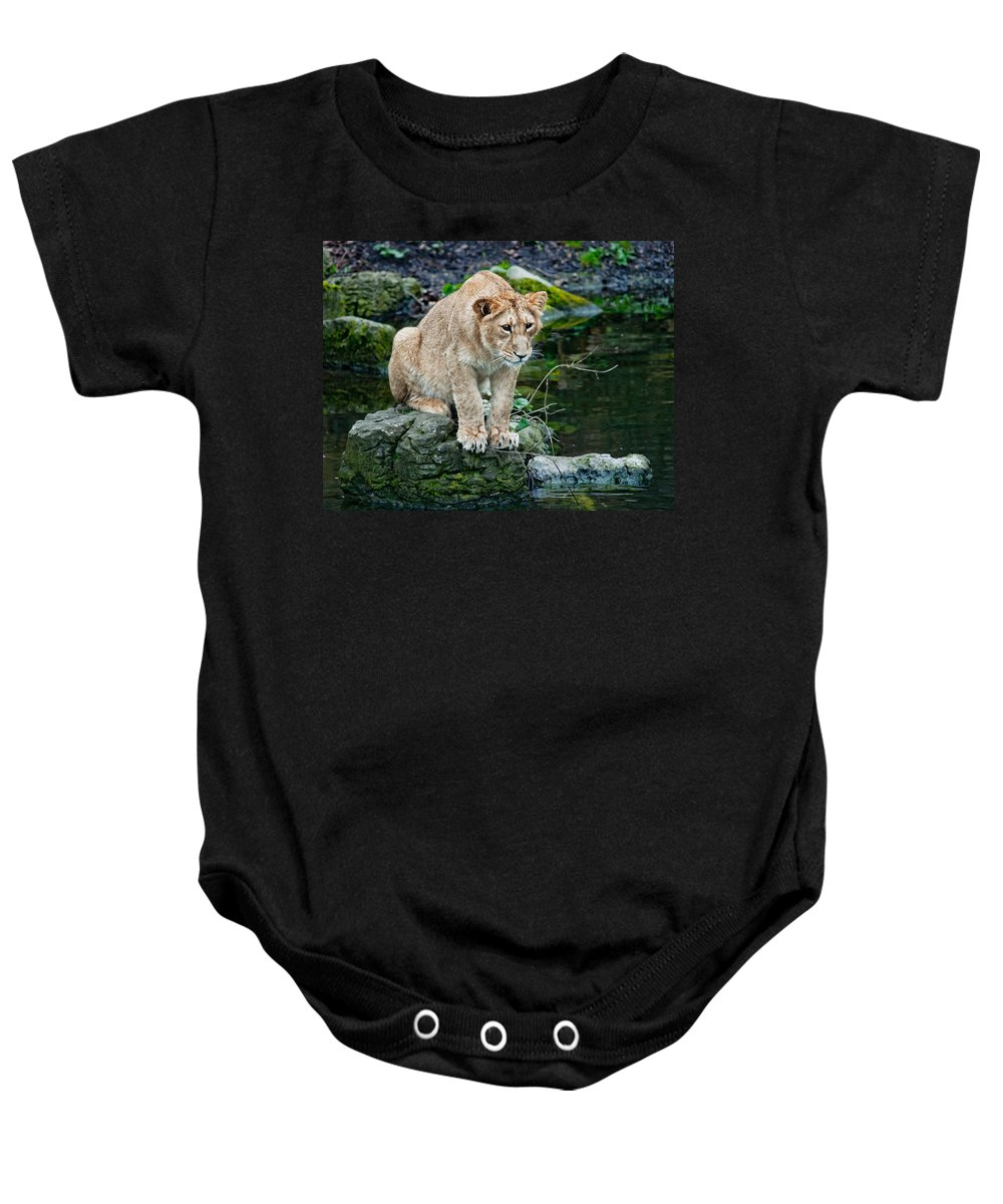 Lioness Baby Onesie featuring the photograph Hunting Ducks by Bel Menpes