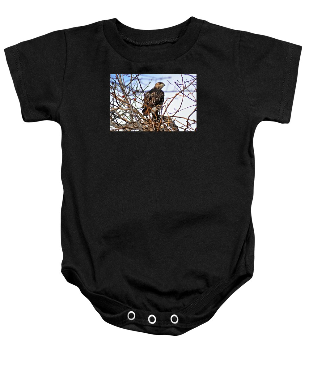 Red-tailed Baby Onesie featuring the photograph Hunting Red-tailed Hawk by Darin Bokeno