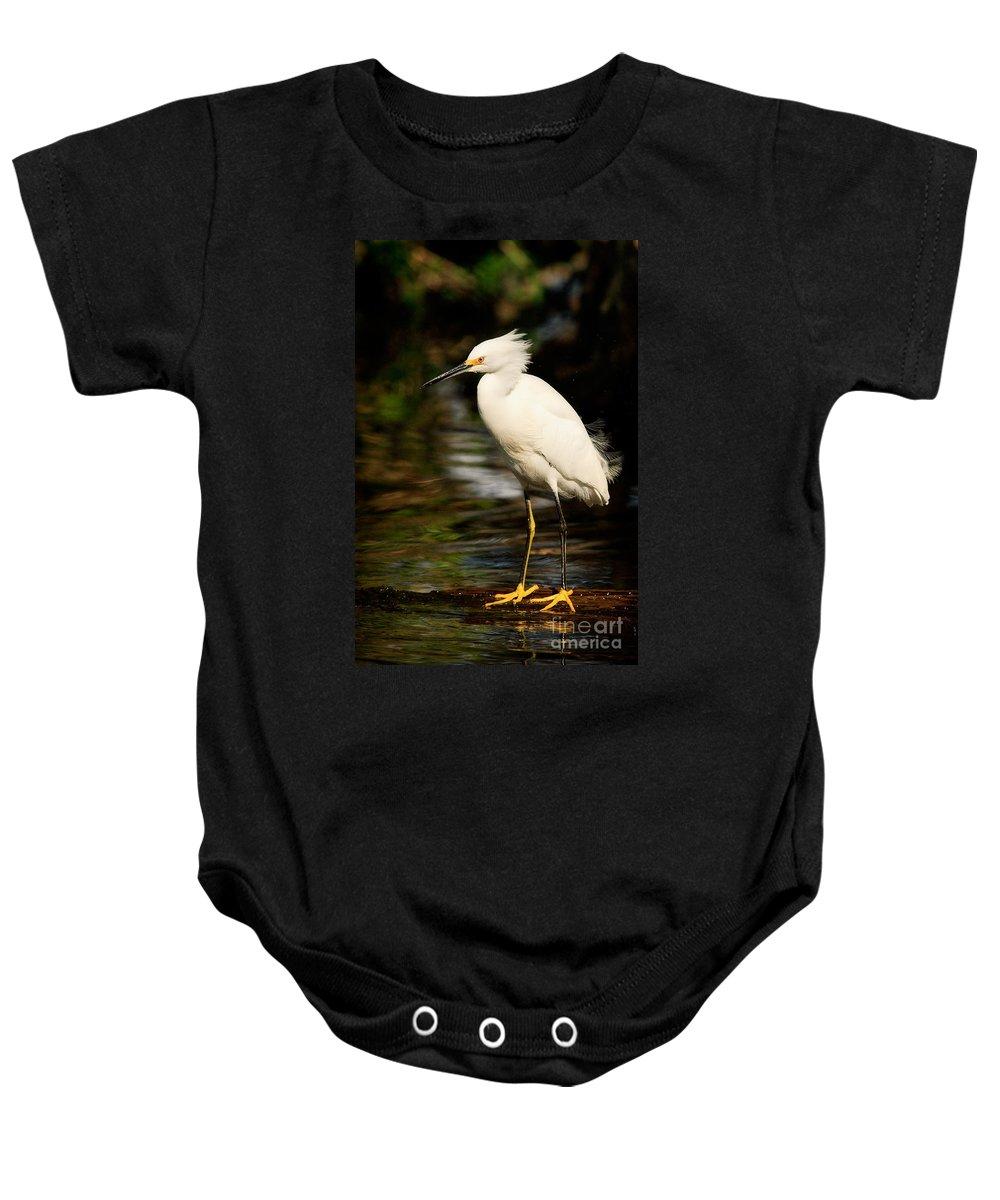 Immature Snowy Egret Baby Onesie featuring the photograph Immature Snowy Egret by Matt Suess
