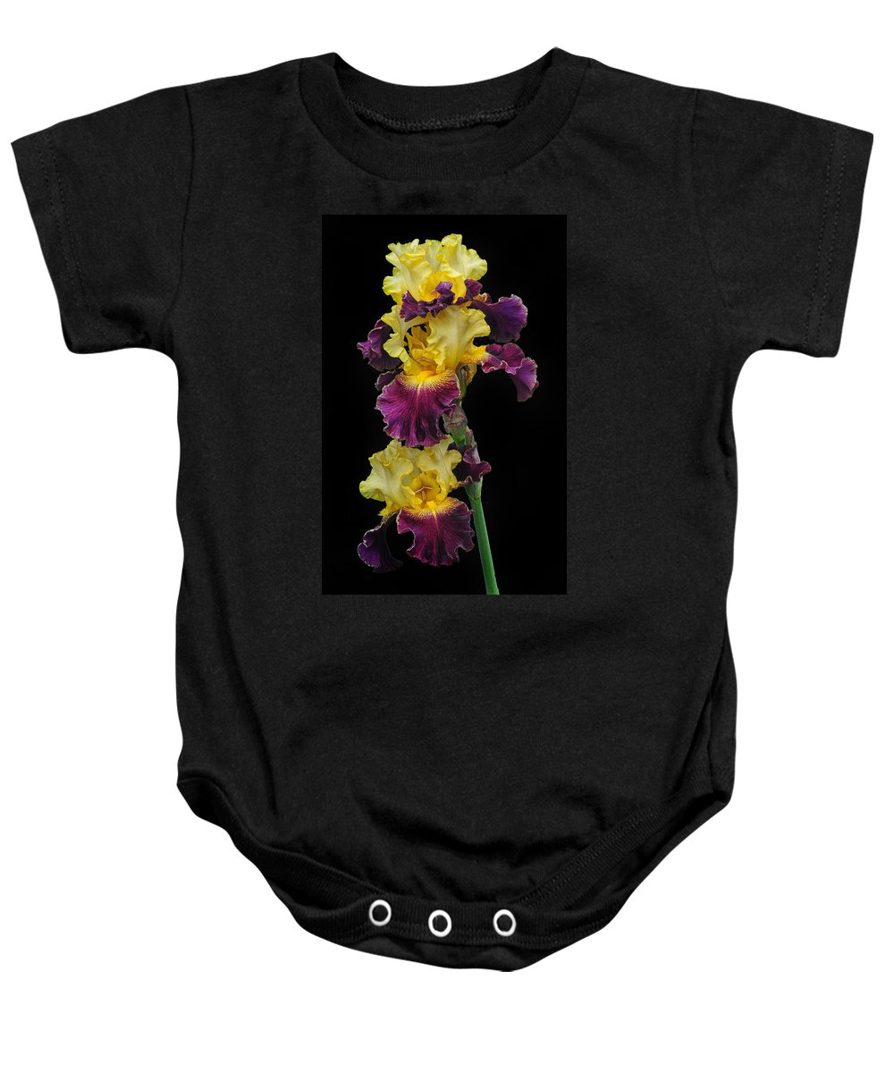 Yellow Iris Baby Onesie featuring the photograph Iris Triple by Dave Mills