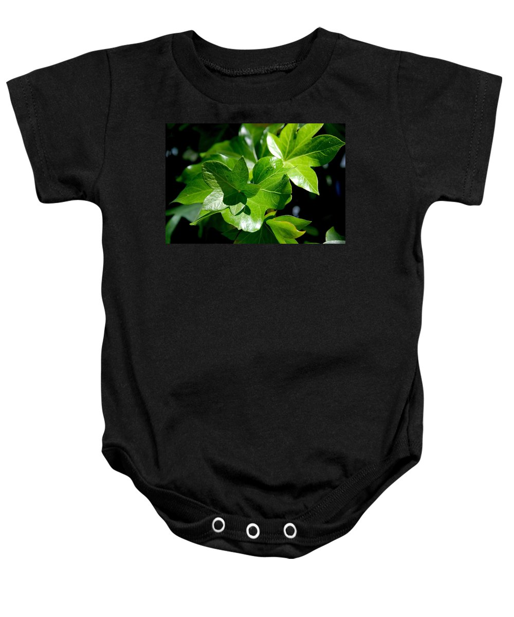 Photography Baby Onesie featuring the photograph Ivy In Sunlight by Susanne Van Hulst