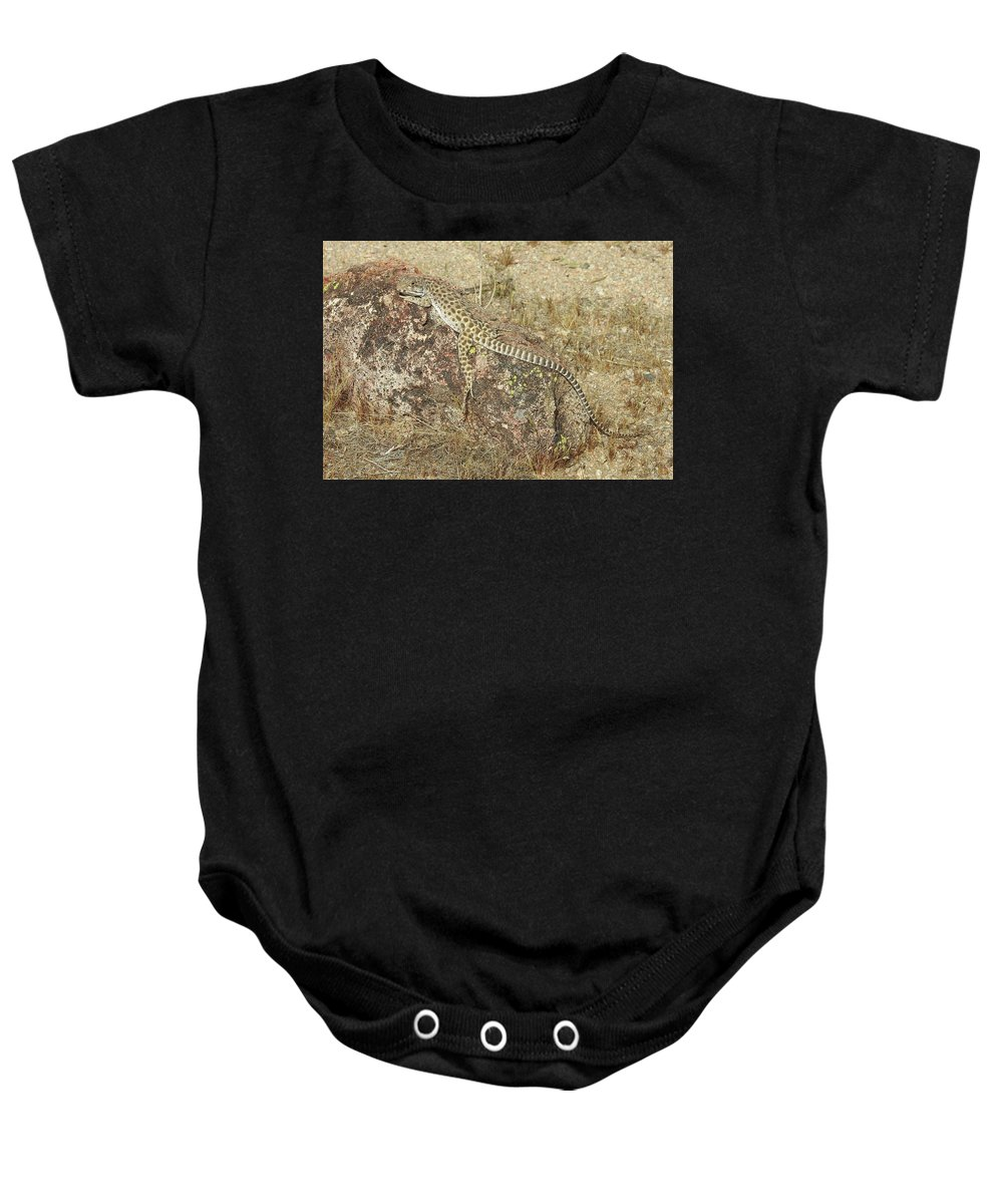 Long-nosed Leopard Lizard Baby Onesie featuring the photograph Just Hanging Around by Sandra O'Toole