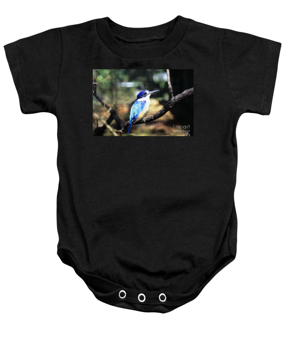 Animal Art Baby Onesie featuring the photograph Kingfisher by Dave Fleetham - Printscapes