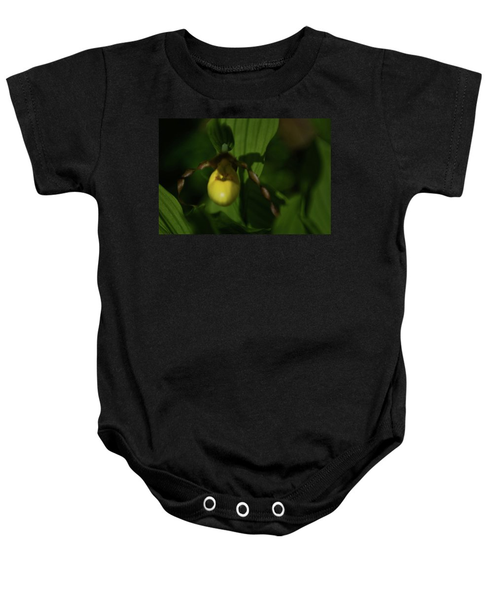 lady Slipper Baby Onesie featuring the photograph Lady Slipper by Paul Mangold