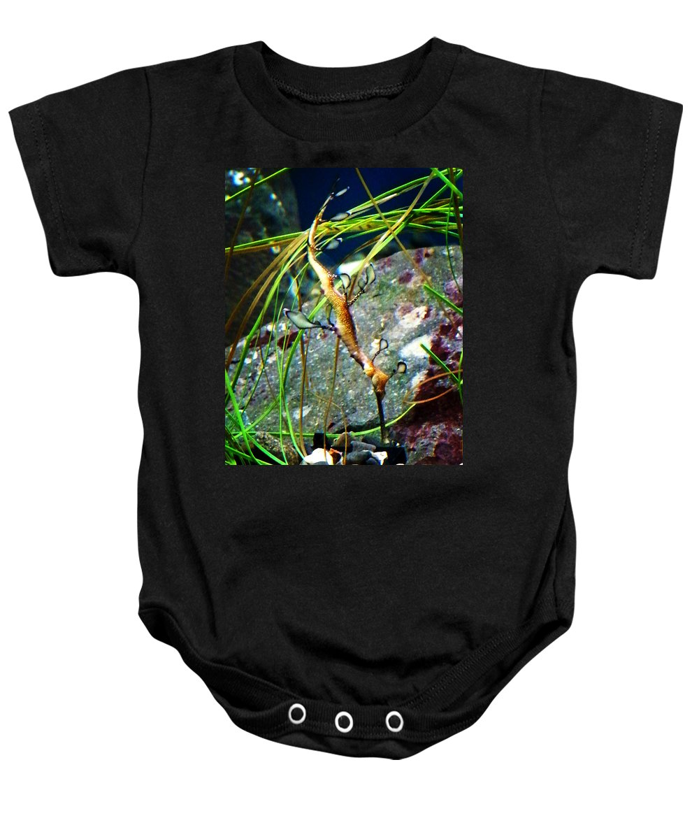 Paintings Baby Onesie featuring the photograph Leafy Sea Dragon by Anthony Jones