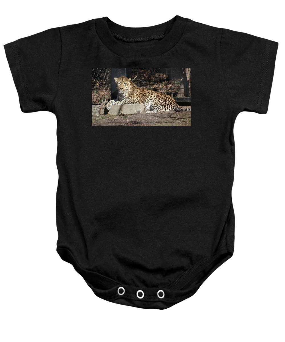 Maryland Baby Onesie featuring the photograph Leopard Relaxing by Ronald Reid