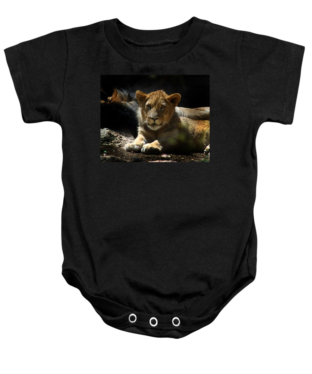 Lions Baby Onesie featuring the photograph Lion Cub by Anthony Jones