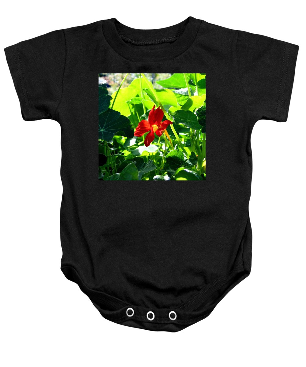 Nasturtium Baby Onesie featuring the photograph Lone Nasturtium  by Will Borden