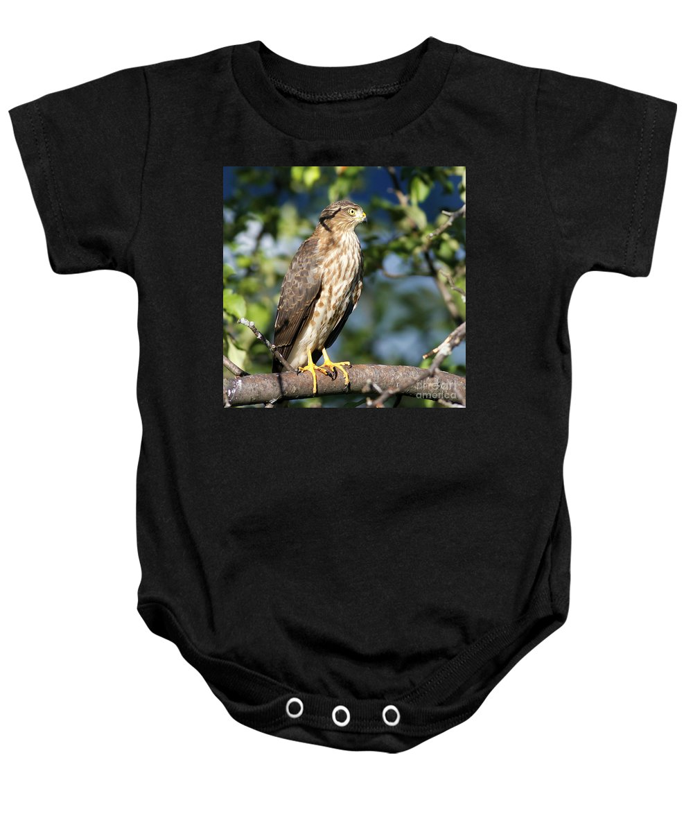 Hawk Baby Onesie featuring the photograph Looking For Supper by Deborah Benoit