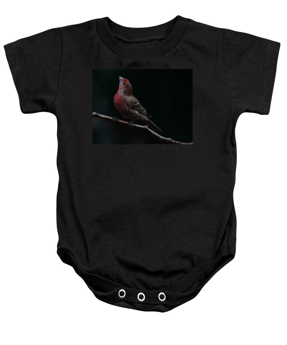 Finch Baby Onesie featuring the photograph Looking Towards Heaven by Gaby Swanson