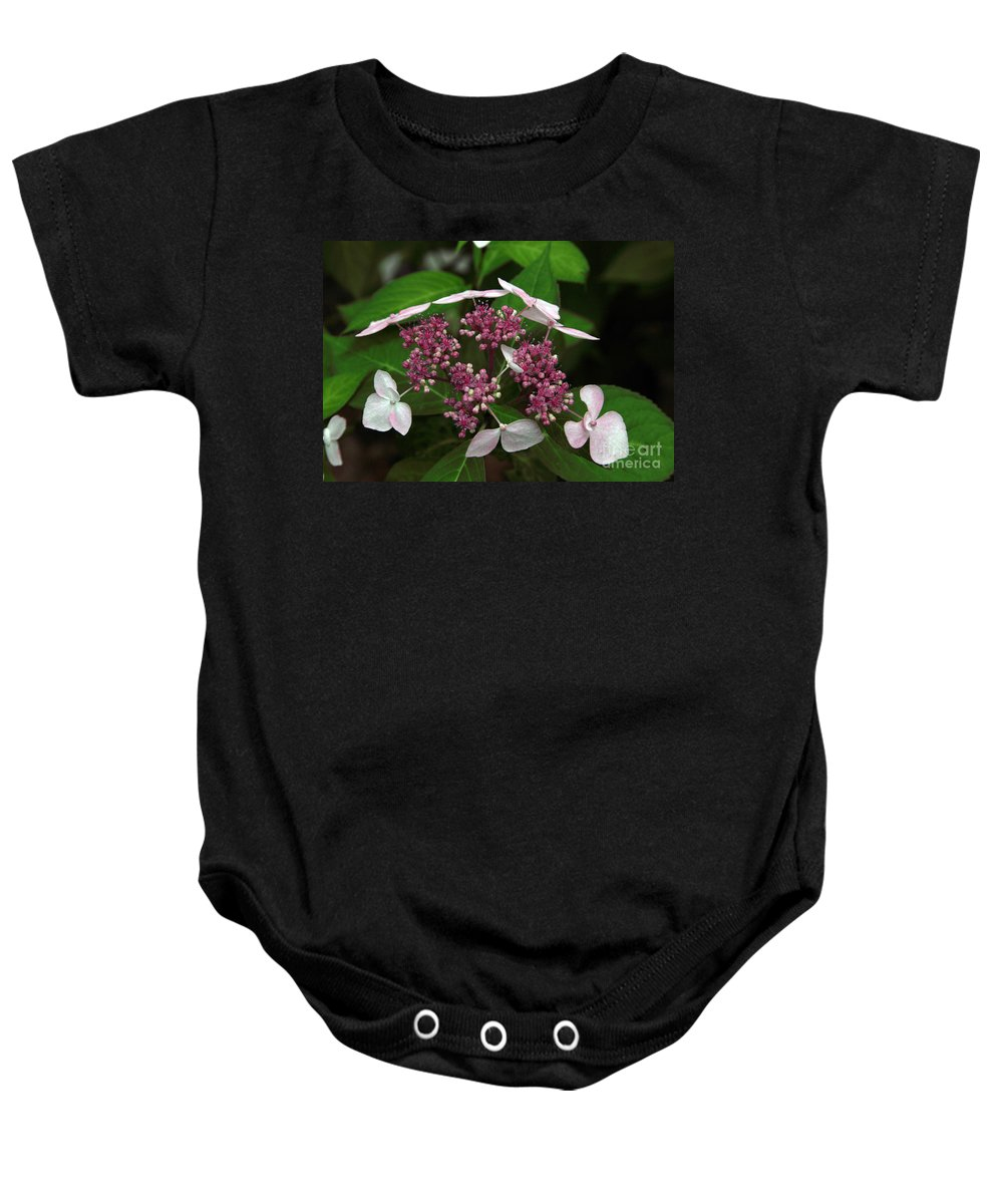 Hydrangea Baby Onesie featuring the photograph Lovely by Amanda Barcon