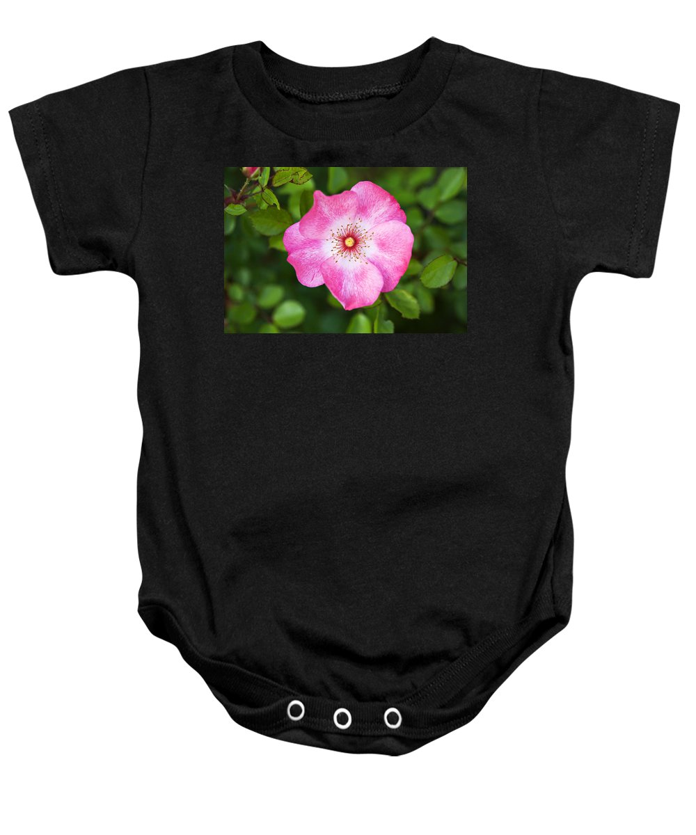 Pink Baby Onesie featuring the photograph Lovely Pink Rose by Marilyn Hunt